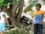 ai426.photobucket.com_albums_pp345_MarisaDavid_abe1c5ba.